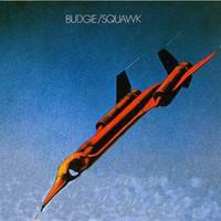 Budgie, Squawk