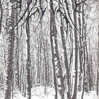 Alcest, Tristesse hivernale