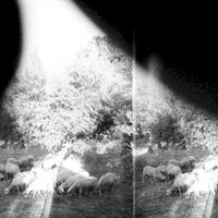 Godspeed You! Black Emperor, Asunder, Sweet and Other Distress
