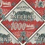 Quantic Presenta Flowering Inferno, 1000 Watts