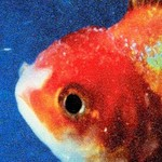 Vince Staples, Big Fish Theory