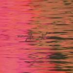 Silverstein, Dead Reflection