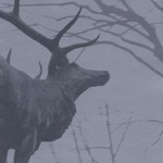 Agalloch, The Mantle