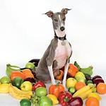 Shellac, Excellent Italian Greyhound