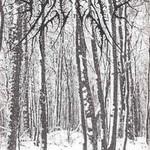 Alcest, Tristesse hivernale mp3