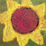 Never Shout Never, Sunflower