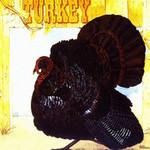 Wild Turkey, Turkey