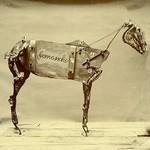 Chadwick Stokes, The Horse Comanche