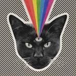Never Shout Never, Black Cat