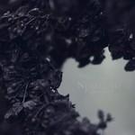Nebelung, Palingenesis