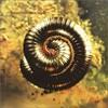 Nine Inch Nails, Closer